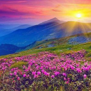 valley_of_flowers_2.jpg